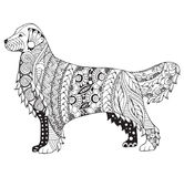 Golden retriever dog zentangle stylized, vector, illustration, f. Reehand pencil, pattern. Zen art. Black and white illustration on white background. Adult anti Royalty Free Stock Photography