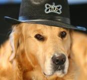Golden retriever en sombrero del traje Fotos de archivo libres de regalías