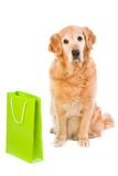 Golden retriever and green light bag Royalty Free Stock Photos
