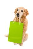 Golden retriever and green light bag Stock Photos