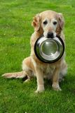 Golden retriever and hiny bowl Stock Images