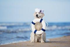 Golden retriever-Hund, der eine Lebenboje auf einem Strand hält Stockfotos