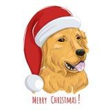 Golden retriever-Hund trägt Weihnachtshut Lizenzfreie Stockbilder