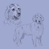 Golden retriever-Hundeskizze Lizenzfreies Stockfoto
