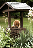 Golden Retriever Making A Wish Stock Image