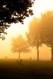 Golden Retriever on misty morning Stock Photos