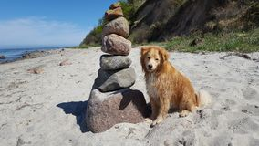 Golden retriever mix is sitting on the beach beside a stone pillar. On a sunny day Royalty Free Stock Photo