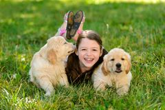 Golden retriever puppies and kid royalty free stock photography