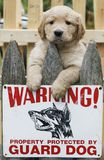 Golden retriever puppy. Above fence with warning sign Stock Photo