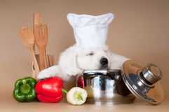 Golden retriever puppy as a cook Royalty Free Stock Images