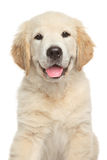 Golden Retriever puppy. Close-up portrait on white backgroun Royalty Free Stock Images