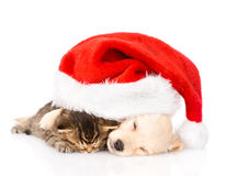 Golden retriever puppy dog  and british cat with santa hat. isolated Stock Photos