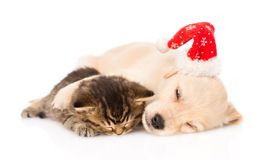 Golden retriever puppy dog  with santa hat and british cat sleep together. isolated. Golden retriever puppy dog  with santa hat and british cat sleep together Stock Photography