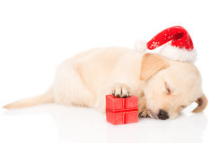 Golden retriever puppy dog with santa hat and gift.  Royalty Free Stock Photo