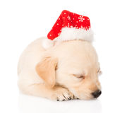 Golden retriever puppy dog with santa hat. isolated Stock Image