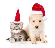 Golden retriever puppy dog and tabby cat with red christmas hats sitting together. isolated on white background Stock Image