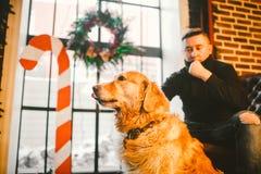 Golden retriever pur, plan rapproché de Labrador, portrait dans l'intérieur avec le décor de Noël en hiver sur le fond de fenêtre Photo libre de droits