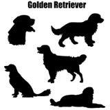 Golden Retriever purebred stock image