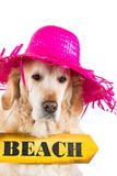 Golden Retriever with a sign indicating the beach Stock Image
