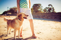 Golden retriever standing by legs of a woman Royalty Free Stock Image