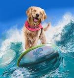 Golden retriever-Surfer stockbilder