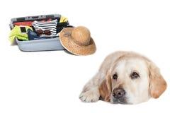 Golden retriever triste se trouvant devant une valise Photo libre de droits