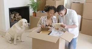 Golden retriever watching his owners pack stock footage