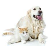 Golden retrieverhunden omfamnar en katt Royaltyfri Foto