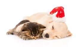 Golden retrievervalphunden med den santa hatten och den brittiska katten sover tillsammans isolerat Arkivbild