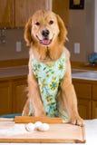 Golden Retriver baking in a kitchen Stock Photos