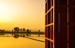 Golden rice field. Asian golden ricefield before sunset and sunlight reflect on the water for gold colour Royalty Free Stock Photo