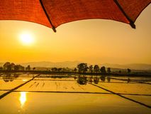 Golden rice field. Asian golden rice field before sunset and sunlight reflect on the water for gold colour Royalty Free Stock Photos