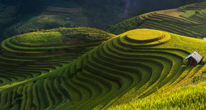 Golden rice terrace in Mu cang chai,Vietnam. Stock Image