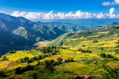 Golden rice terraced fields at harvesting time. Royalty Free Stock Image