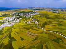 Golden rice terraced fields with the road Royalty Free Stock Images