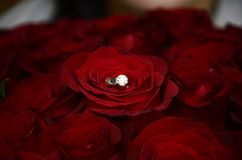Golden ring with diamond on 101 roses stock image