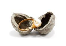 Golden ring in nutshell Stock Image