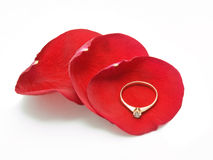 Golden ring on petals of rose Royalty Free Stock Images