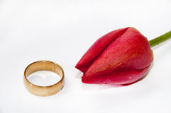 Golden ring with red tulip on the white background Stock Image