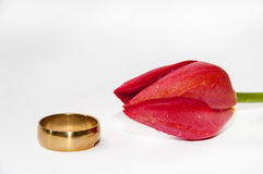 Golden ring with red tulip on the white background Stock Photo