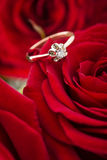 Golden ring on rose Royalty Free Stock Photo