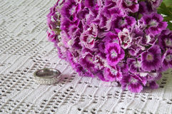 GOLDEN RING VIOLET TURKISH CARNATION Royalty Free Stock Photography