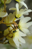 Golden rings on flowers Stock Images