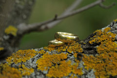 Golden rings on moss Royalty Free Stock Photos