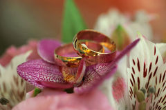 Golden rings on orchids Stock Photos