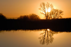 Golden Riparian Reflection Stock Image