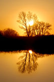 Golden Riparian Reflection. Reflected Tree in Golden Setting Sunlight at Wildlife Refuge Stock Photo