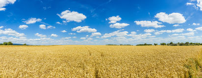Golden, ripe wheat against blue sky background Stock Photography