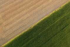 Free Golden Ripe Wheat Field Diagonaly Divided By Green Corn Field In Sunset. Artistic View From Above Of Farming In Czech Republic. Royalty Free Stock Image - 186524236