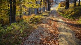 Golden road Stock Image